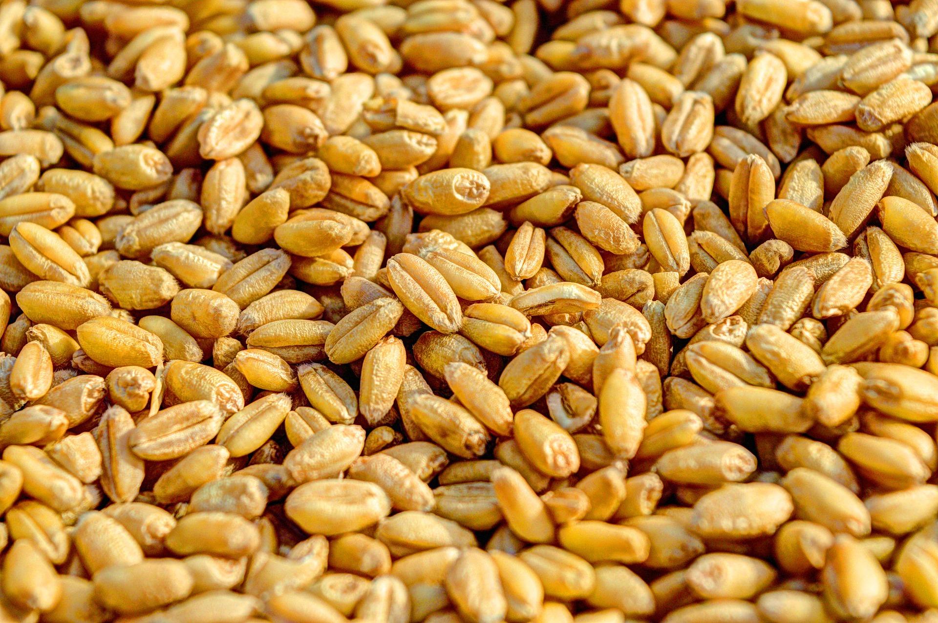 Україна збільшила експорт зерна на 30% з початку сезону 2019/20