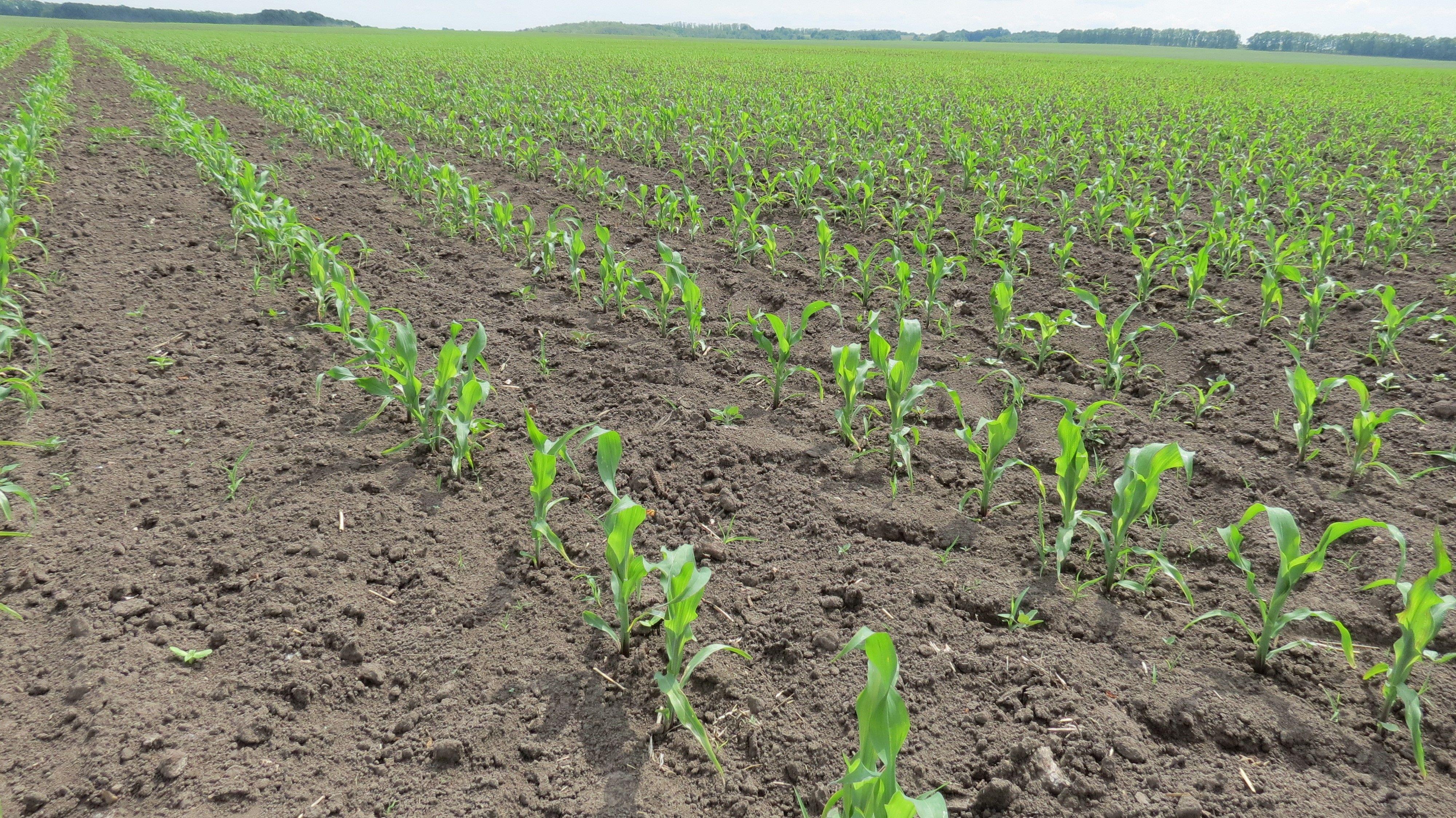 Покращення структури ґрунту за рахунок біологічних добрив